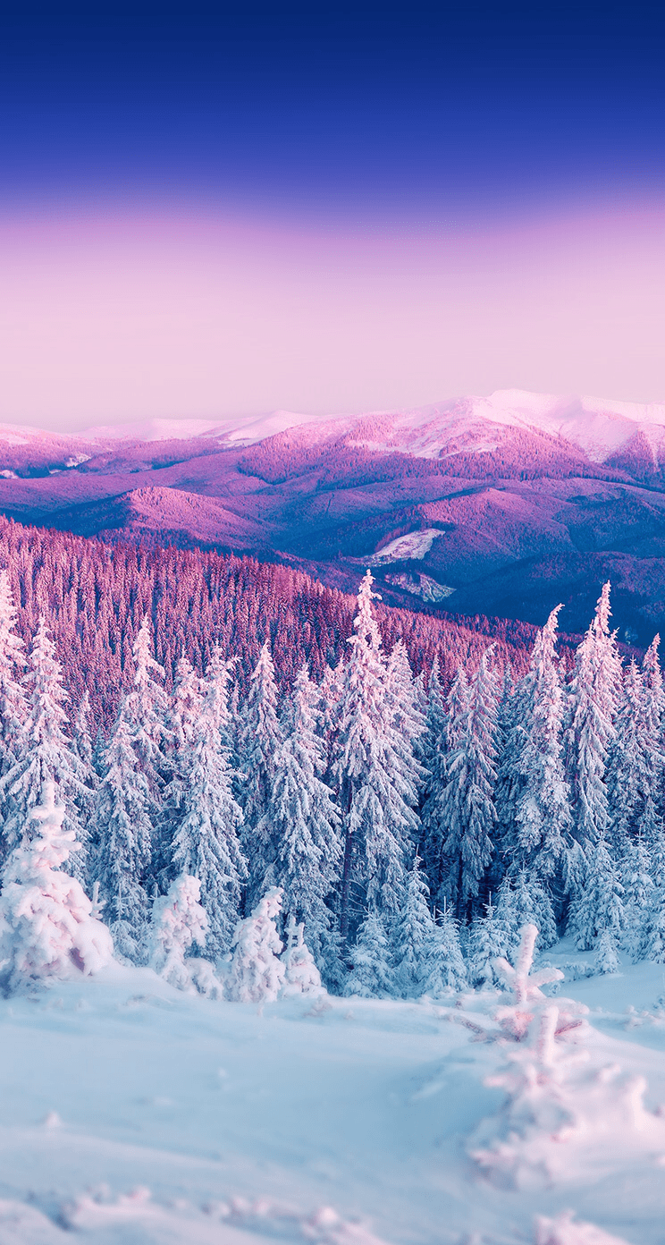 Winter Phone Wallpapers Top Free Winter Phone Backgrounds Wallpaperaccess