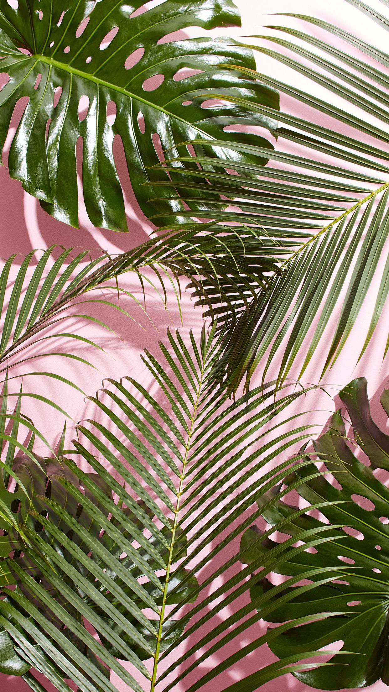 Palm Leaves Iphone Wallpapers Top Free Palm Leaves Iphone Backgrounds Wallpaperaccess