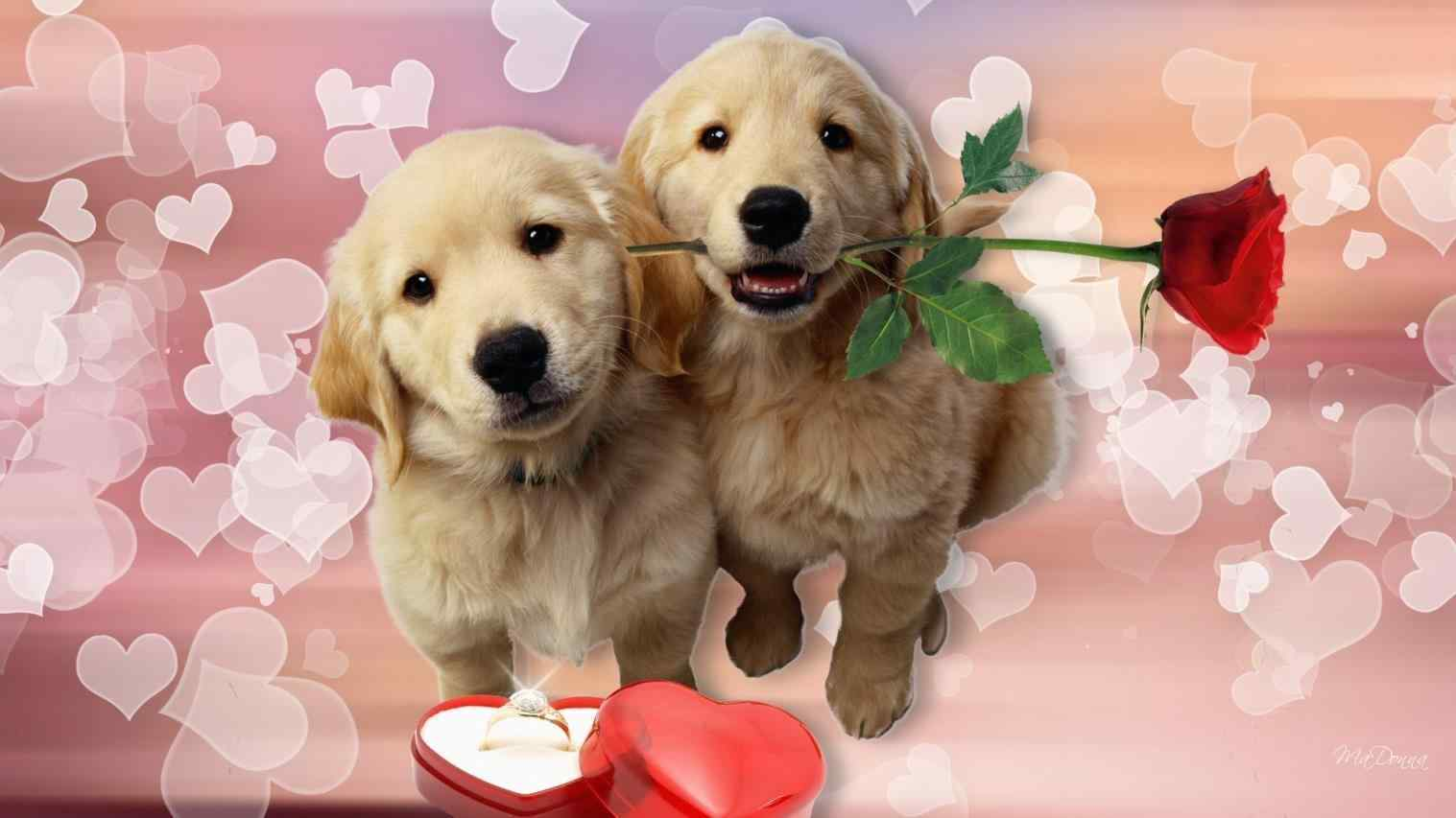 Valentine S Day Puppy Wallpapers Top Free Valentine S Day Puppy Backgrounds Wallpaperaccess