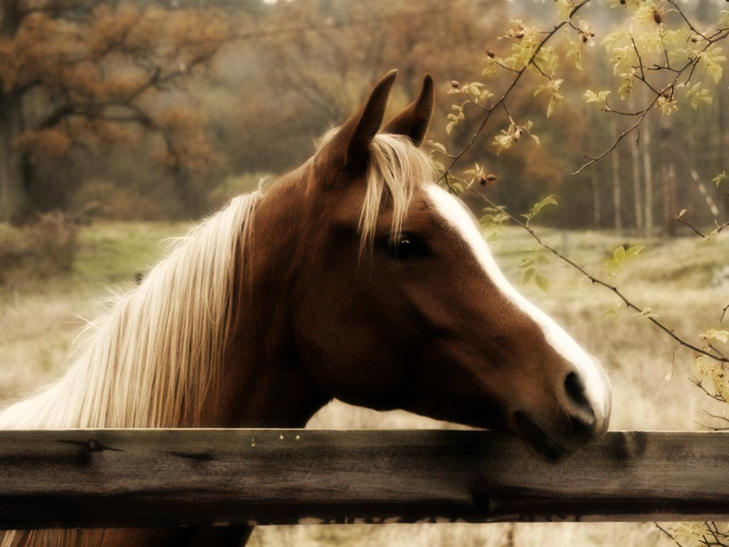 Fall Horse Wallpapers Top Free Fall Horse Backgrounds Wallpaperaccess