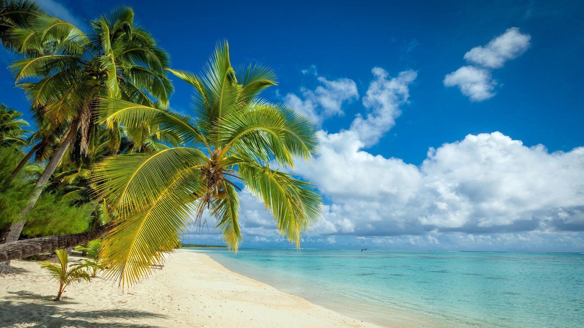 1920x1080 Palm Island hình nền.  Hình nền đảo đẹp, Hình nền đảo tuyệt vời và Hình nền đảo lãng mạn