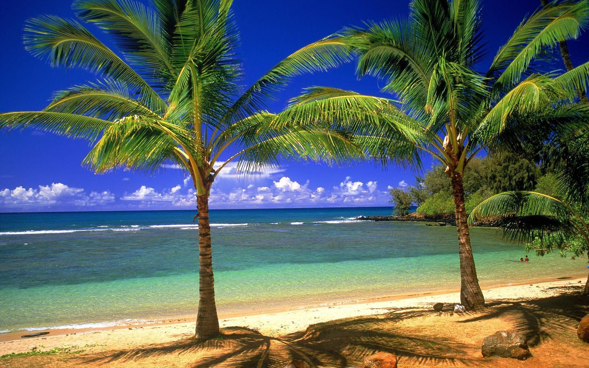 1920x1200 Đảo Palma, bãi biển Hình nền máy tính 1920x1200