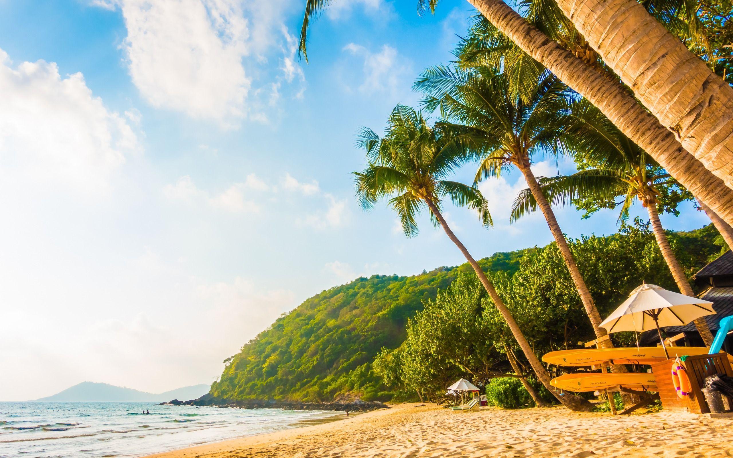 2560x1600 Tải xuống hình nền hòn đảo nhiệt đới, bãi biển, hoàng hôn, tối, rừng nhiệt đới, bờ biển, du lịch mùa hè cho máy tính để bàn với độ phân giải 2560x1600.  Hình nền hình ảnh HD chất lượng cao