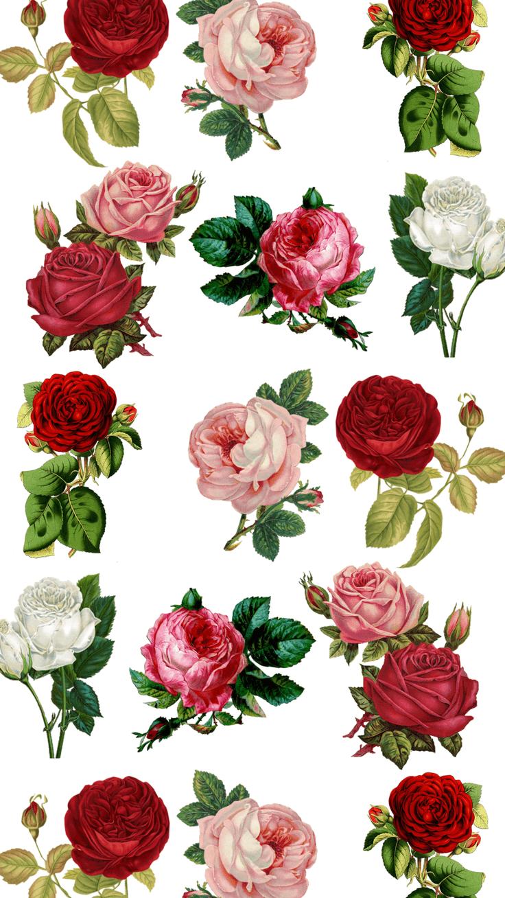Red Flower Wallpaper Iphone 7 Plus Flowers Healthy