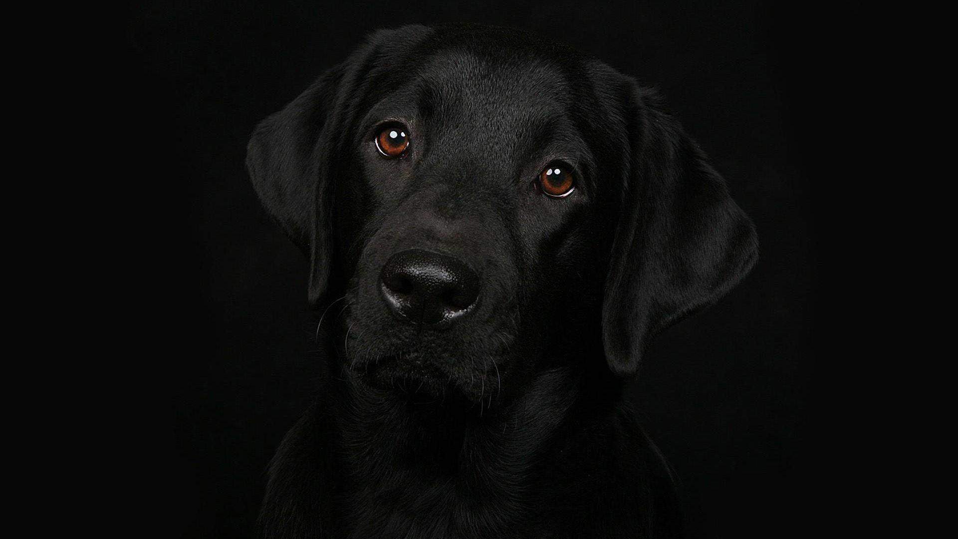 64 Best Free Cool Dog Desktop Wallpapers Wallpaperaccess