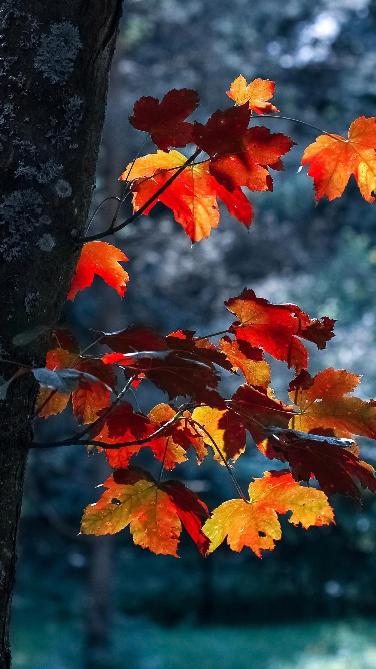 1242x2208 Hình nền iPhone XS mùa thu - Hình nền mùa thu đẹp nhất.  Hình nền phong cảnh, Hình nền iPhone mùa thu, Chụp ảnh thiên nhiên