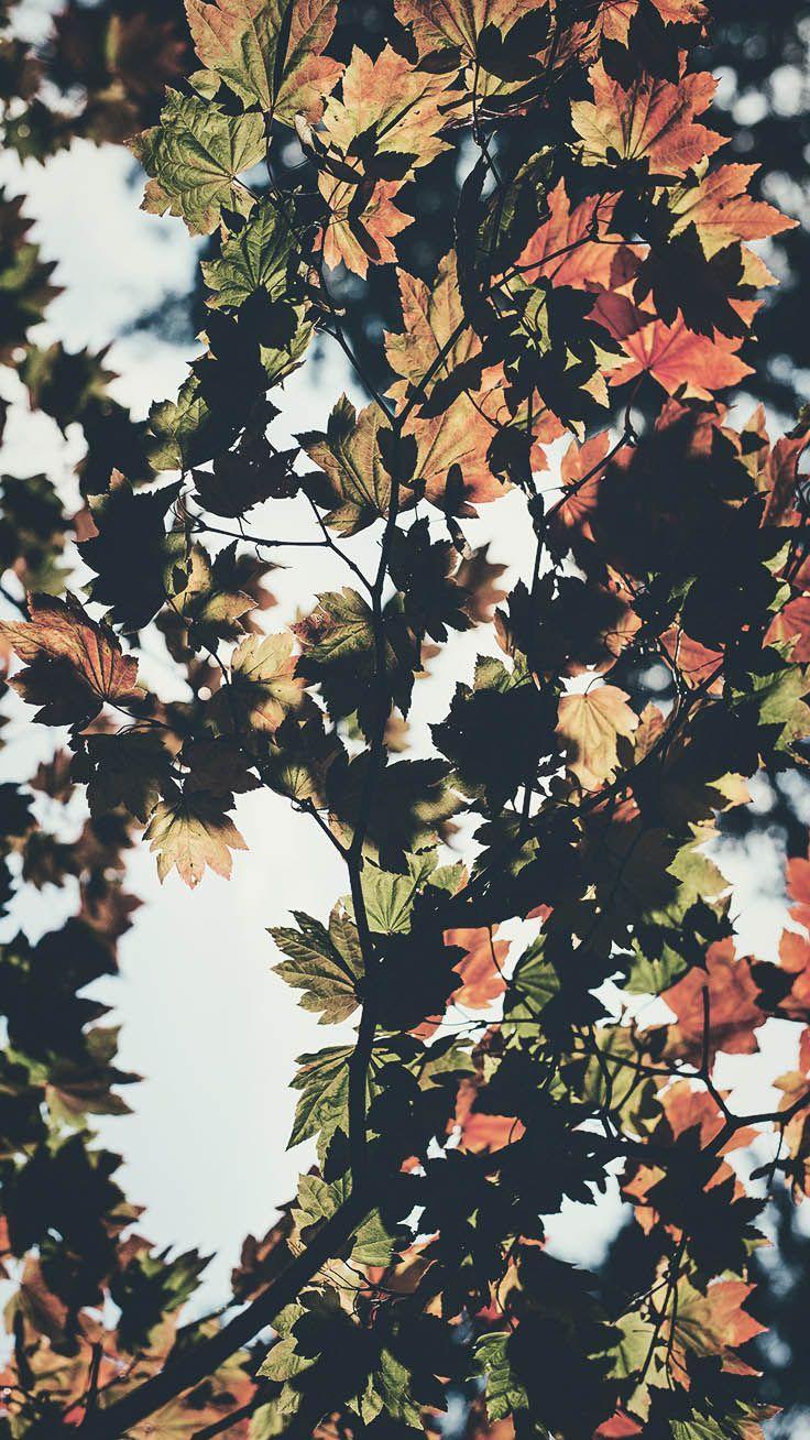 Hình nền iPhone 7 Plus lấy cảm hứng từ mùa thu miễn phí 736x1308