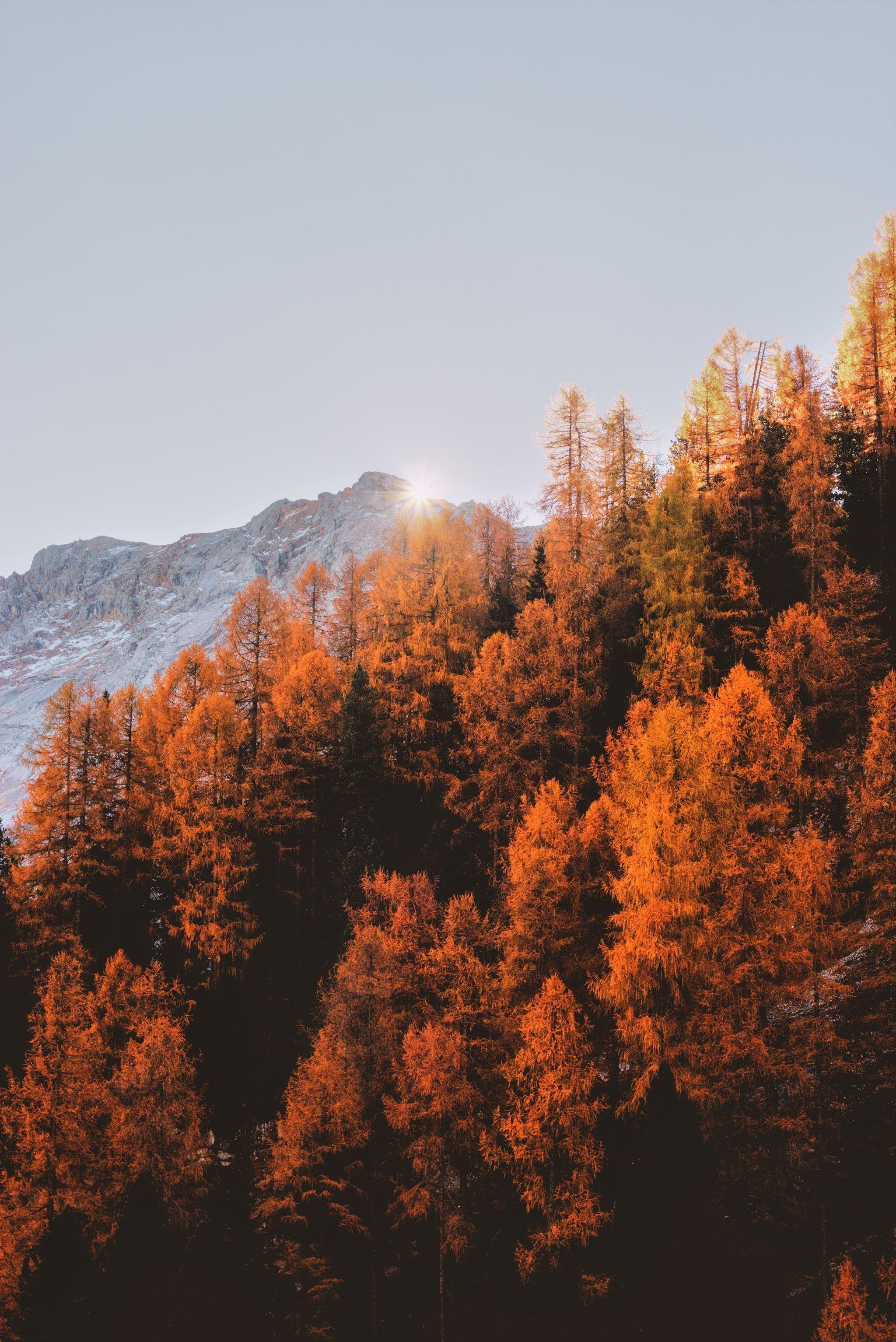 2048x3067 Rừng Hình Nền iPhone.  50 mùa thu Hình nền iPhone đó