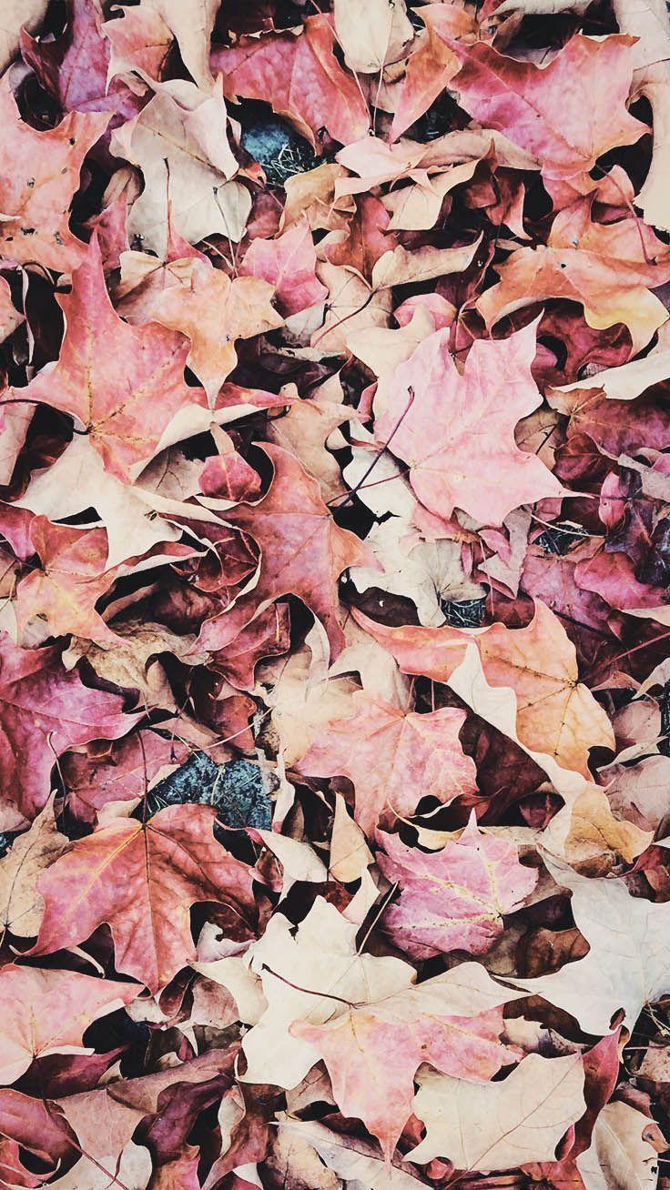 736x1308 Hình nền iPhone X tuyệt đẹp hạnh phúc mùa thu