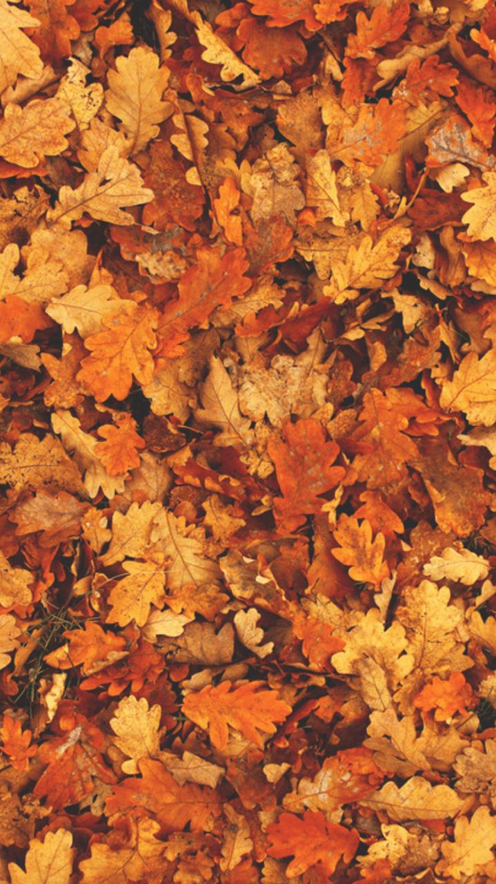 Hình nền mùa thu 719x1280.  Hình nền mùa thu, Nền mùa thu, Nền mùa thu tumblr