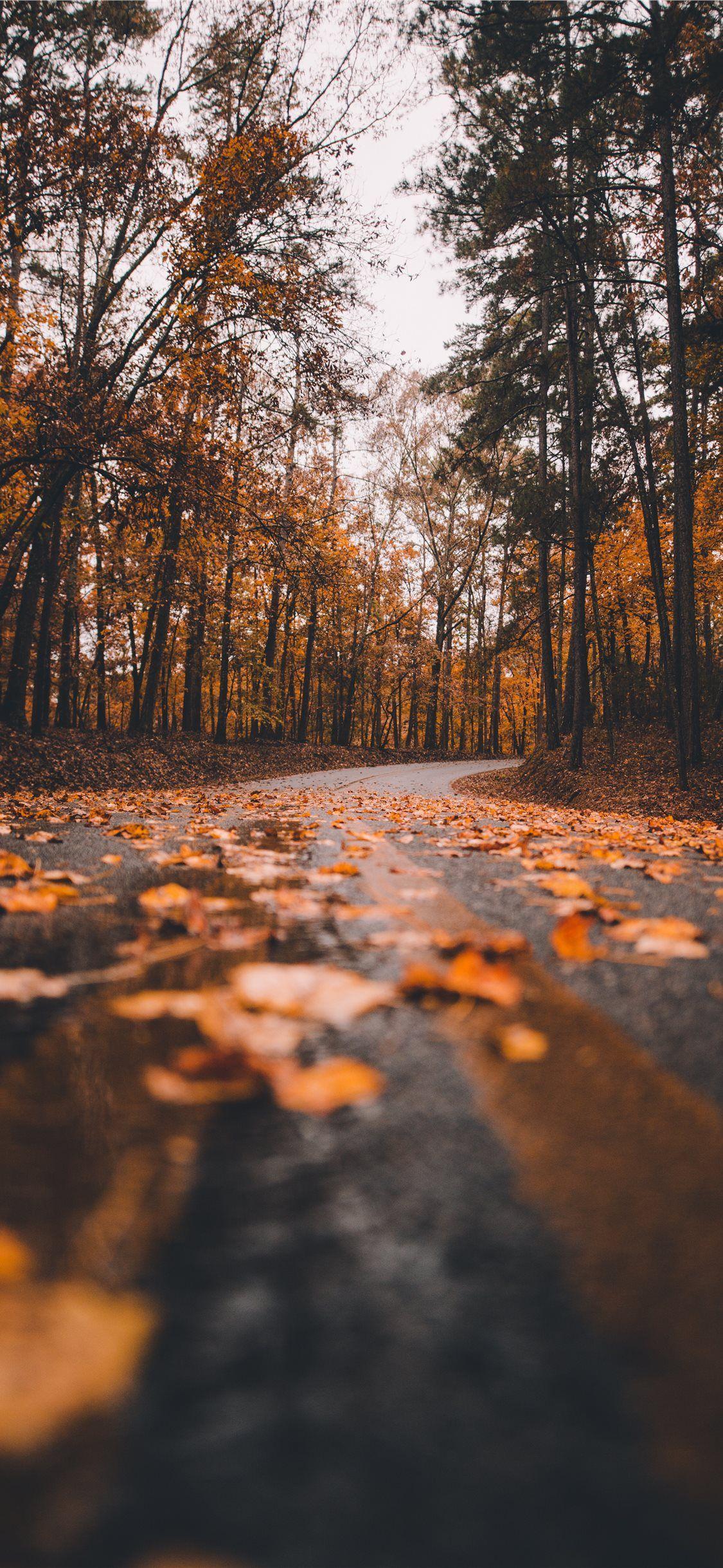1125x2436 Mùa thu đẹp nhất Hình nền iPhone 11 HD