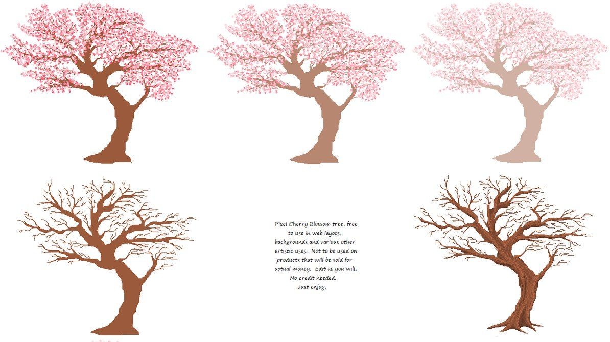 Drawn Cherry Blossom Desktop Wallpapers Top Free Drawn Cherry Blossom Desktop Backgrounds Wallpaperaccess