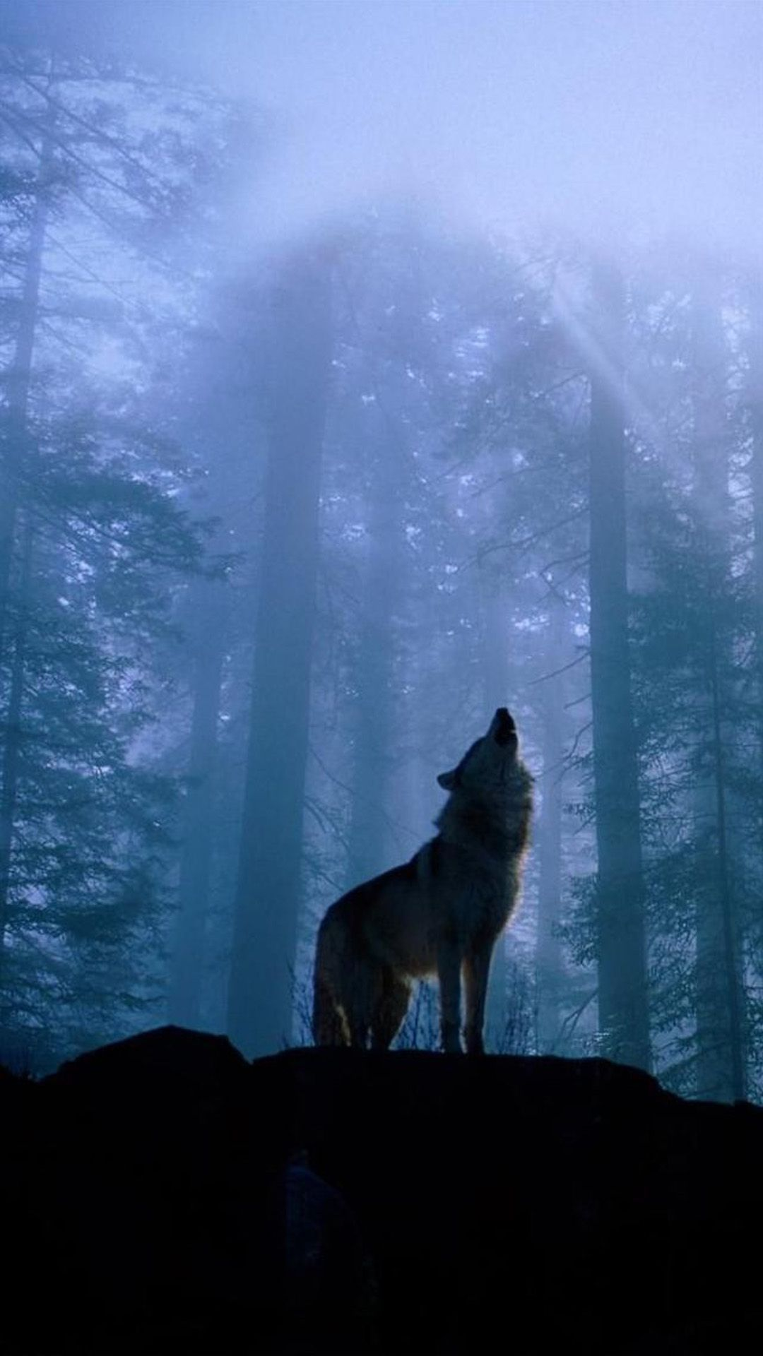 Forest Wolf iPhone Wallpapers - Top