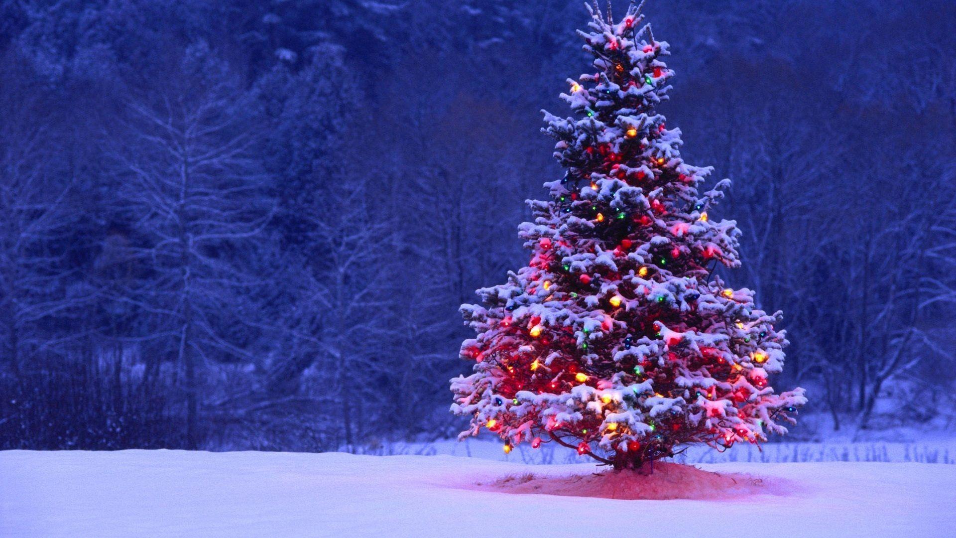 Purple Christmas Tree Wallpapers Top Free Purple Christmas Tree Backgrounds Wallpaperaccess