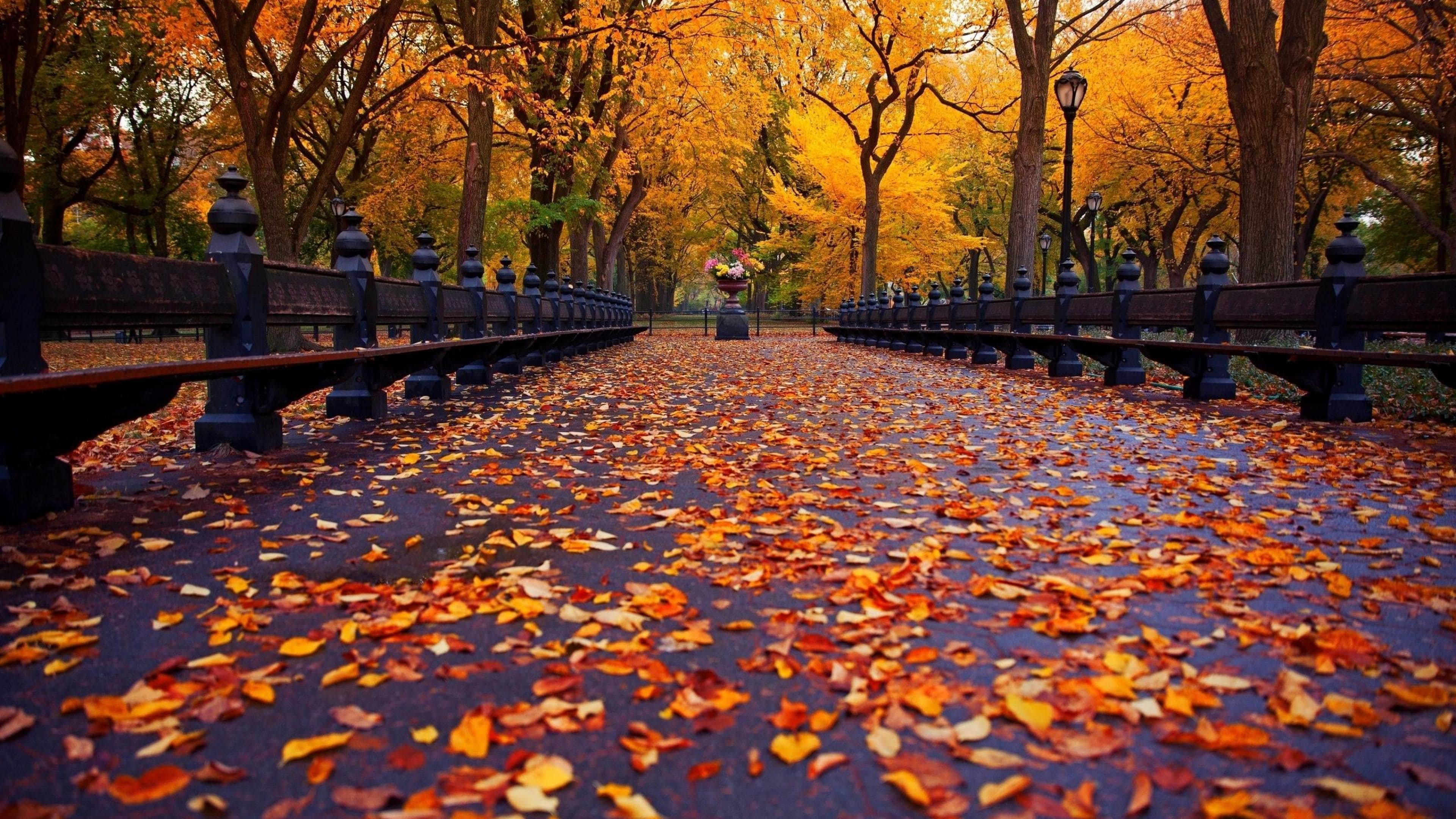 Best Autumn Desktop Wallpapers Top Free Best Autumn Desktop Backgrounds Wallpaperaccess