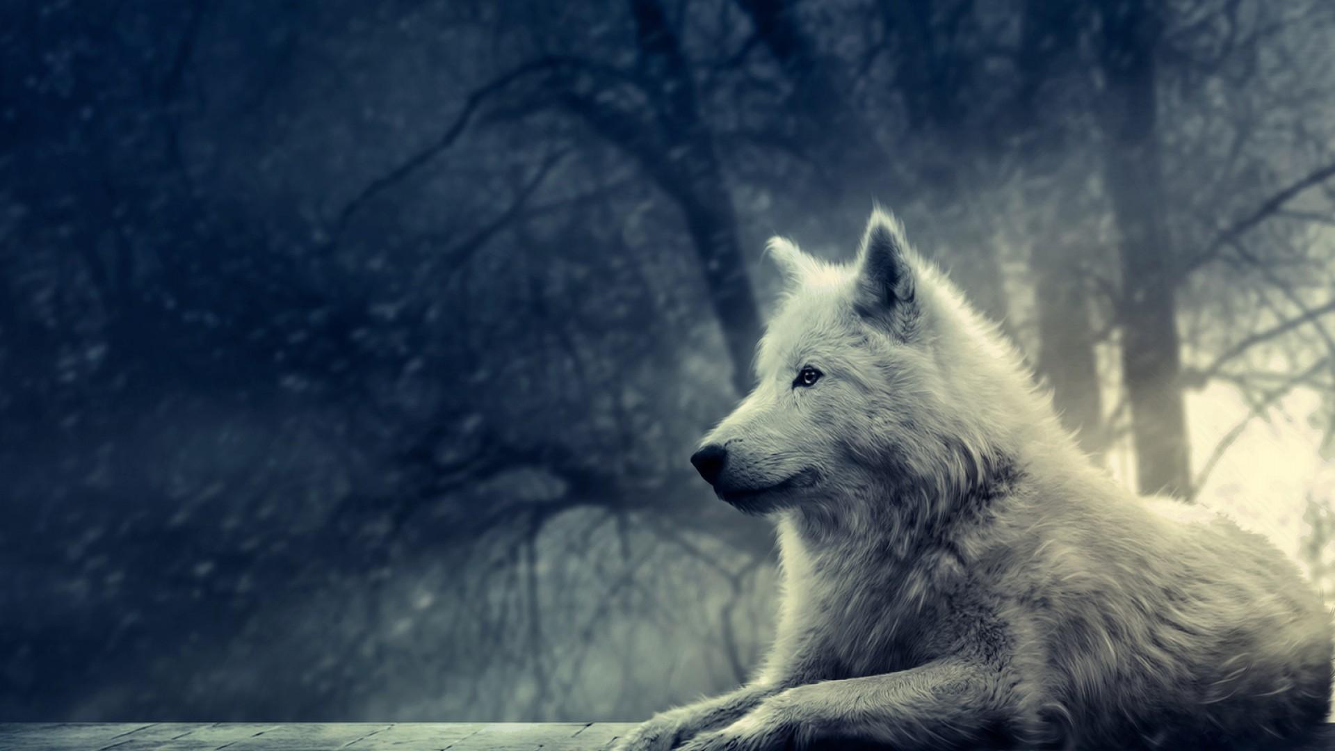 1920x1080 Hình nền chó sói HD miễn phí