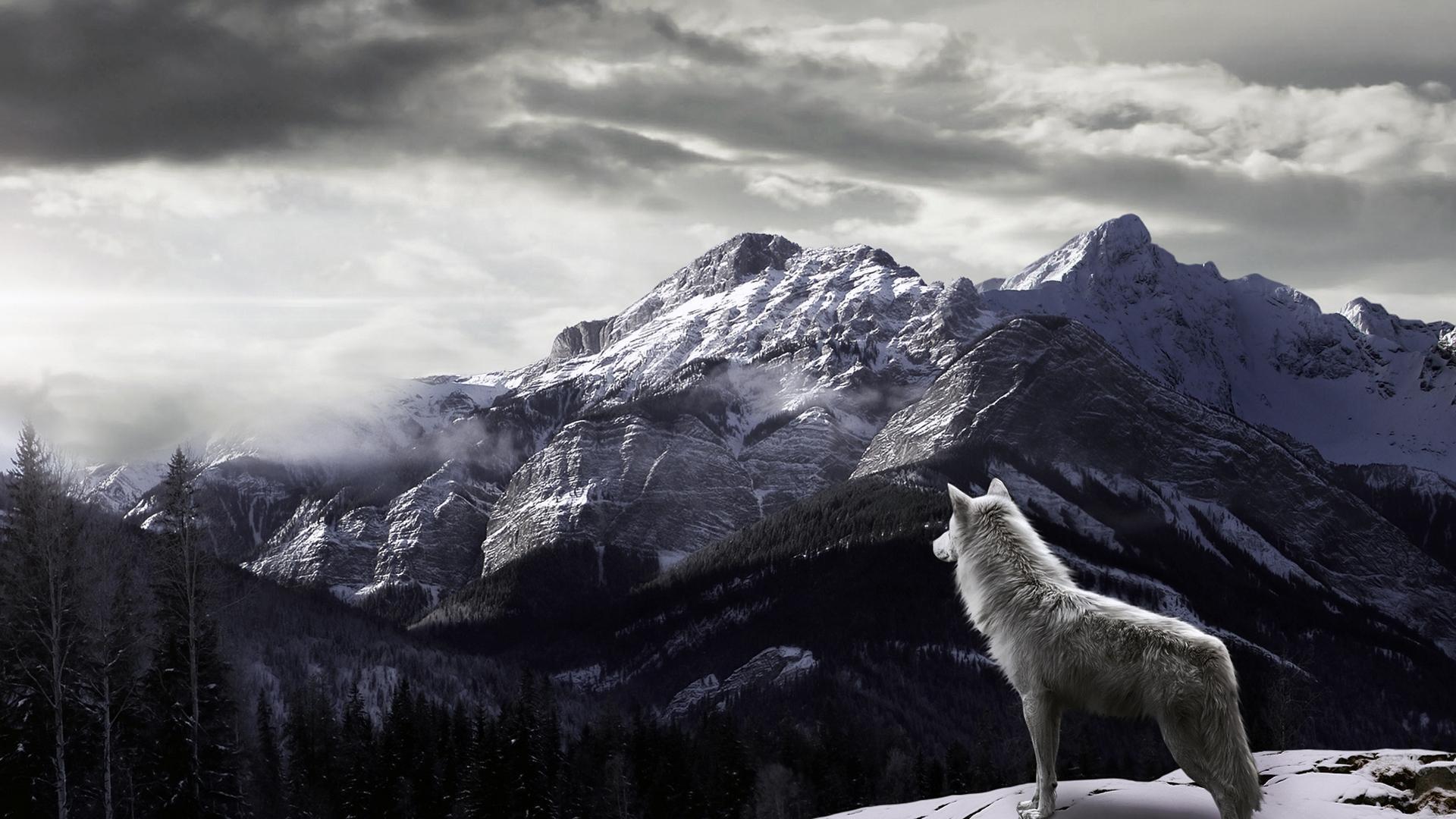 Hình ảnh HD 1920x1080 Wolf Wallpaper - One HD Wallpaper Picture Background