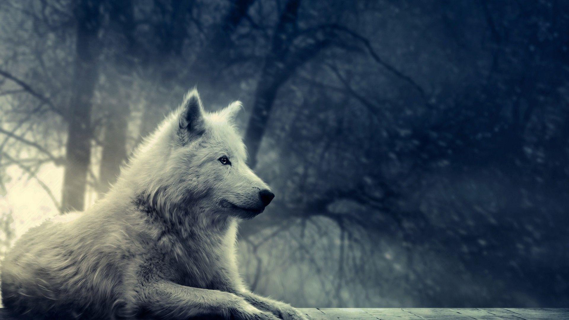 Hình nền chó sói 1920x1080 HD