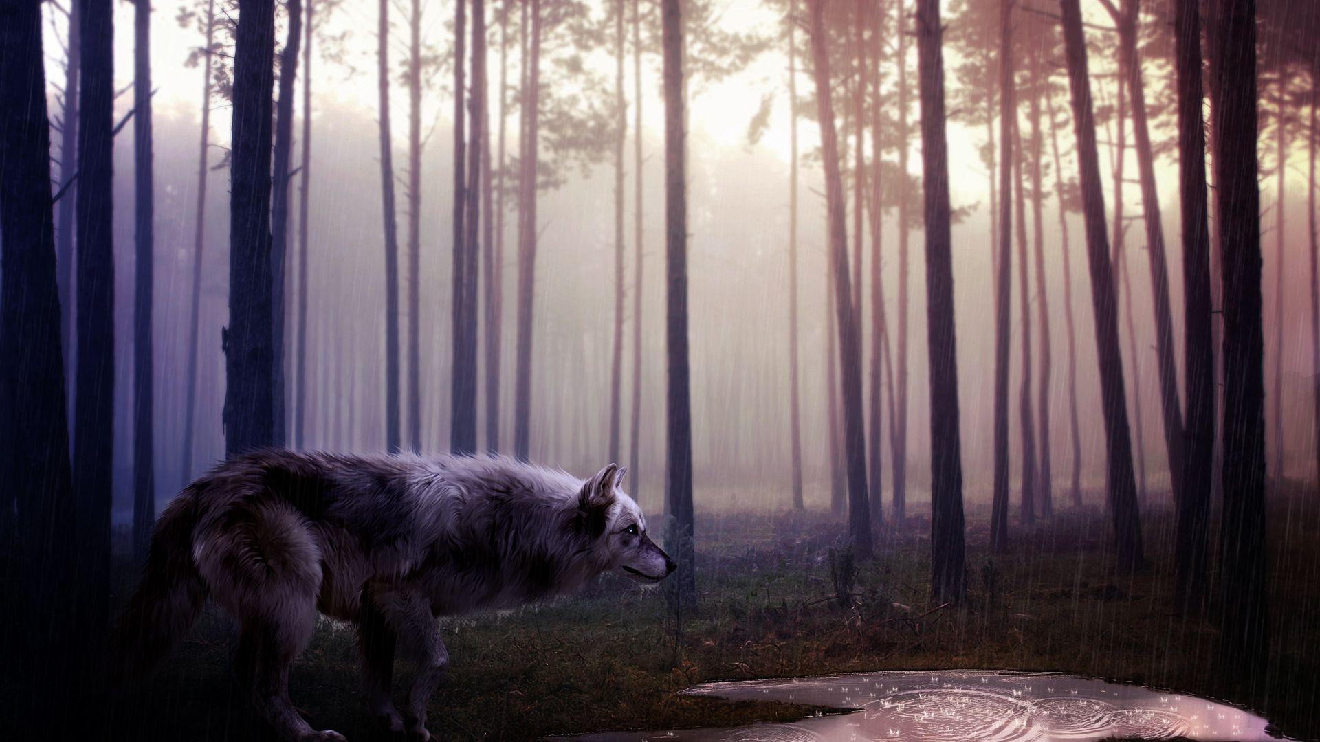 1920x1080 Wild Wolf hình nền