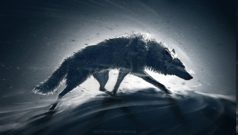 1500x857 động vật, Hình nền chó sói có độ phân giải cao / Nền máy tính để bàn và điện thoại di động