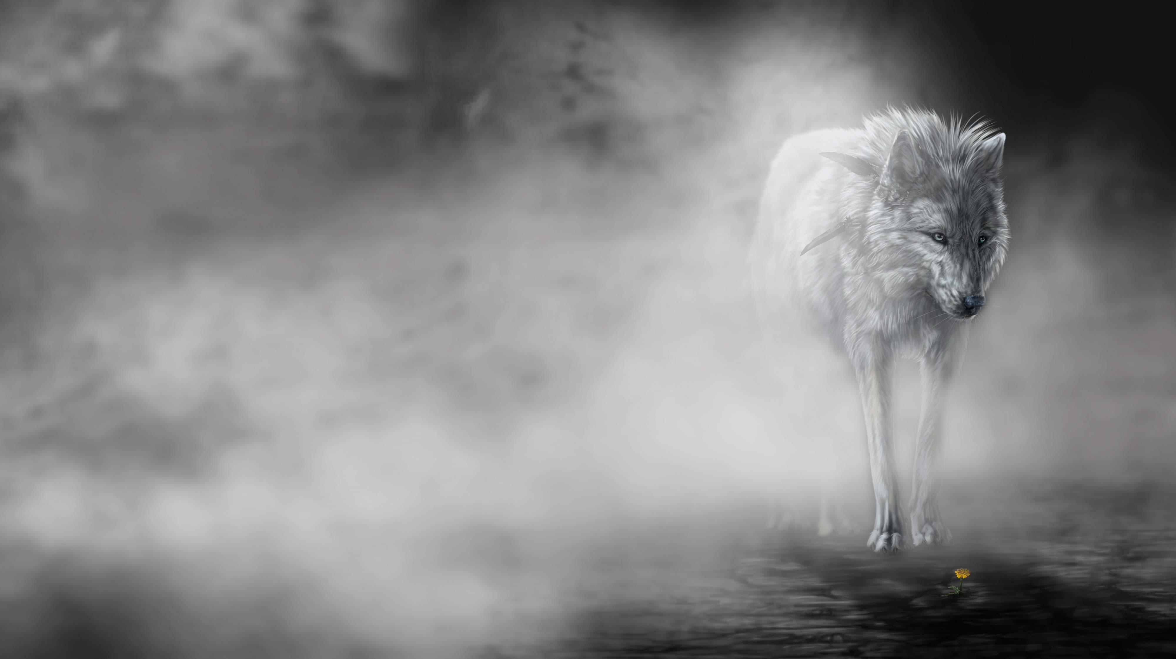 4000x2244 50 hình nền và hình nền chó sói đẹp nhất