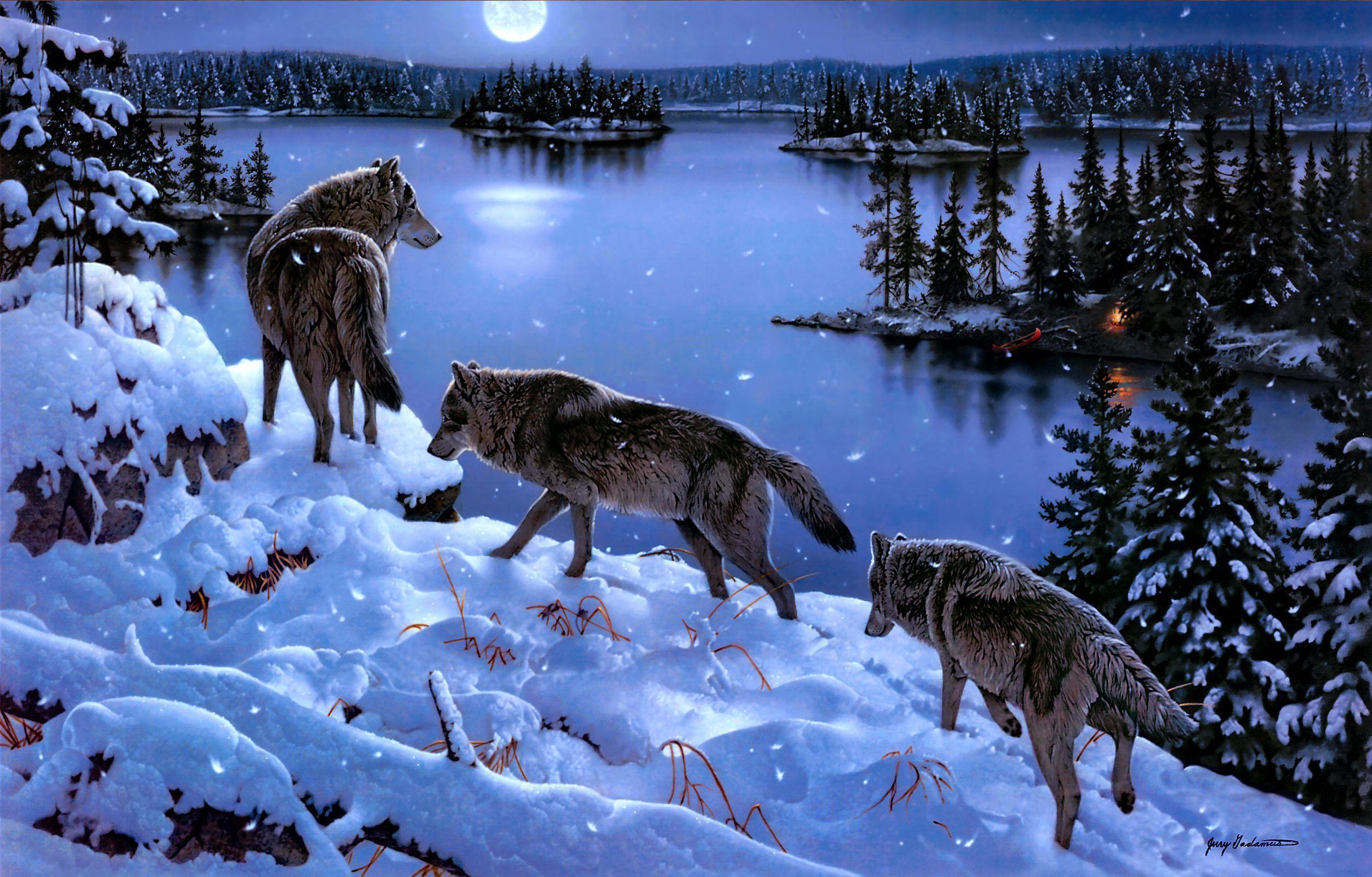 Tải xuống miễn phí 2496x1595 Hình nền chó sói HD