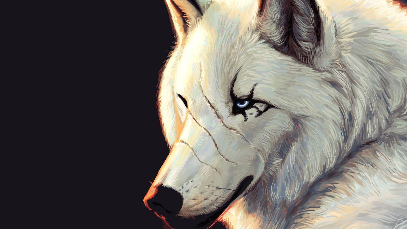 Hình nền 1366x768: Hình nền HD Wolf