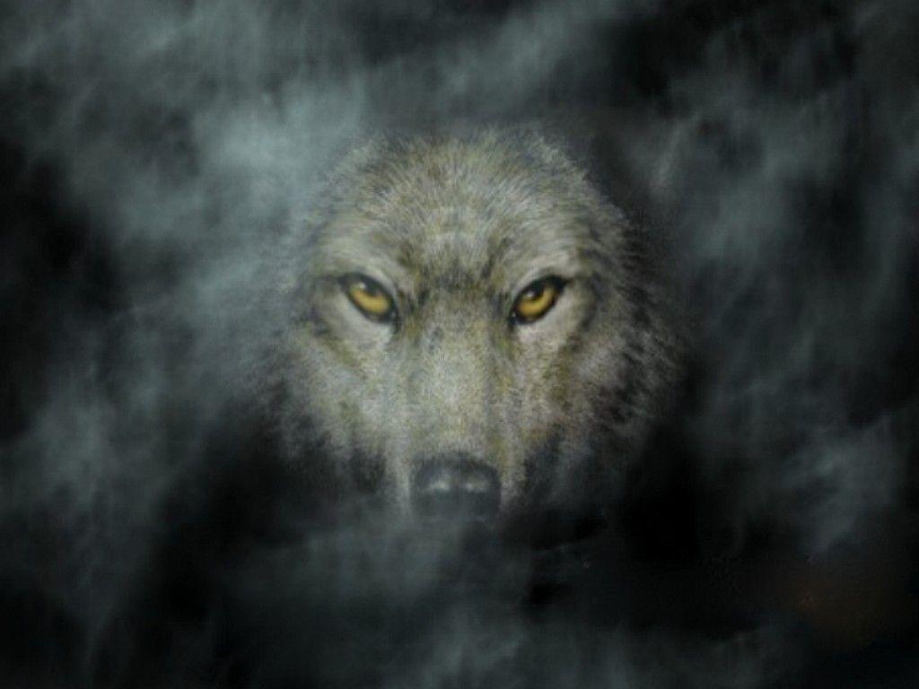 1024x768 Tải xuống 15 Hình nền HD miễn phí cho Wolf.  Hình nền HD miễn phí
