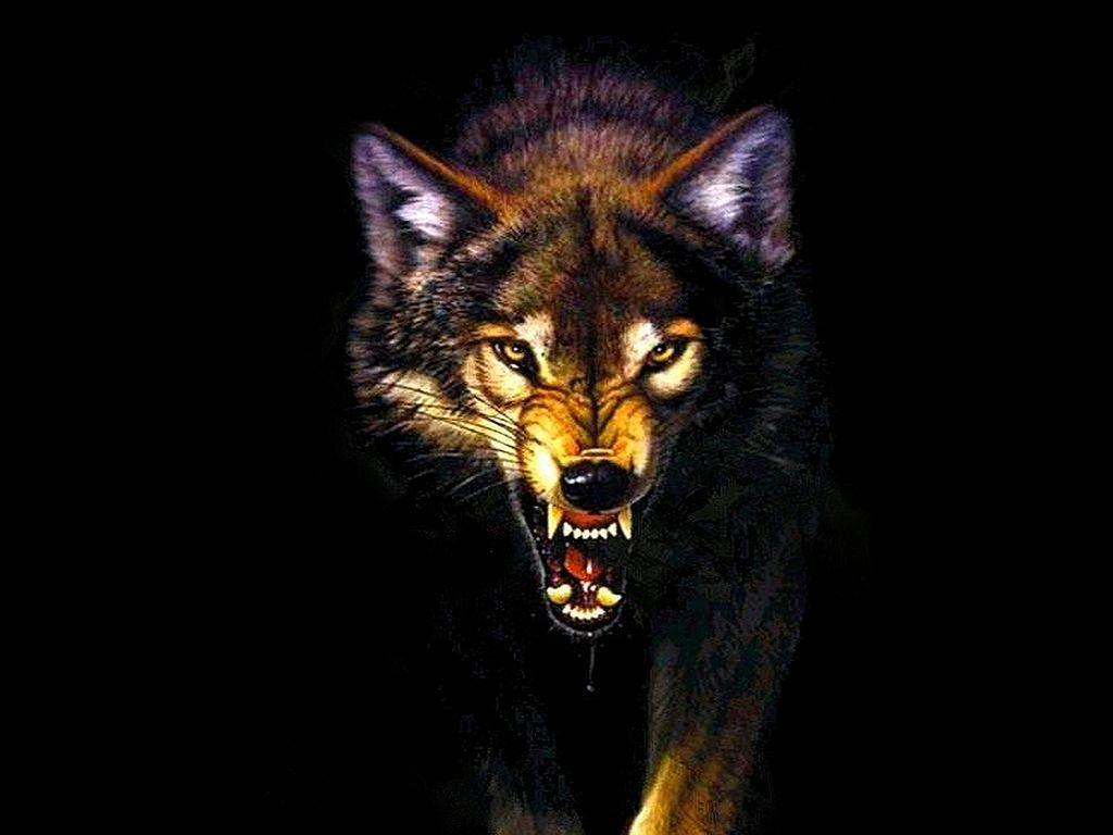 1024x768 PF17: Hình nền sói điên, Nền sói điên chất lượng cao, W