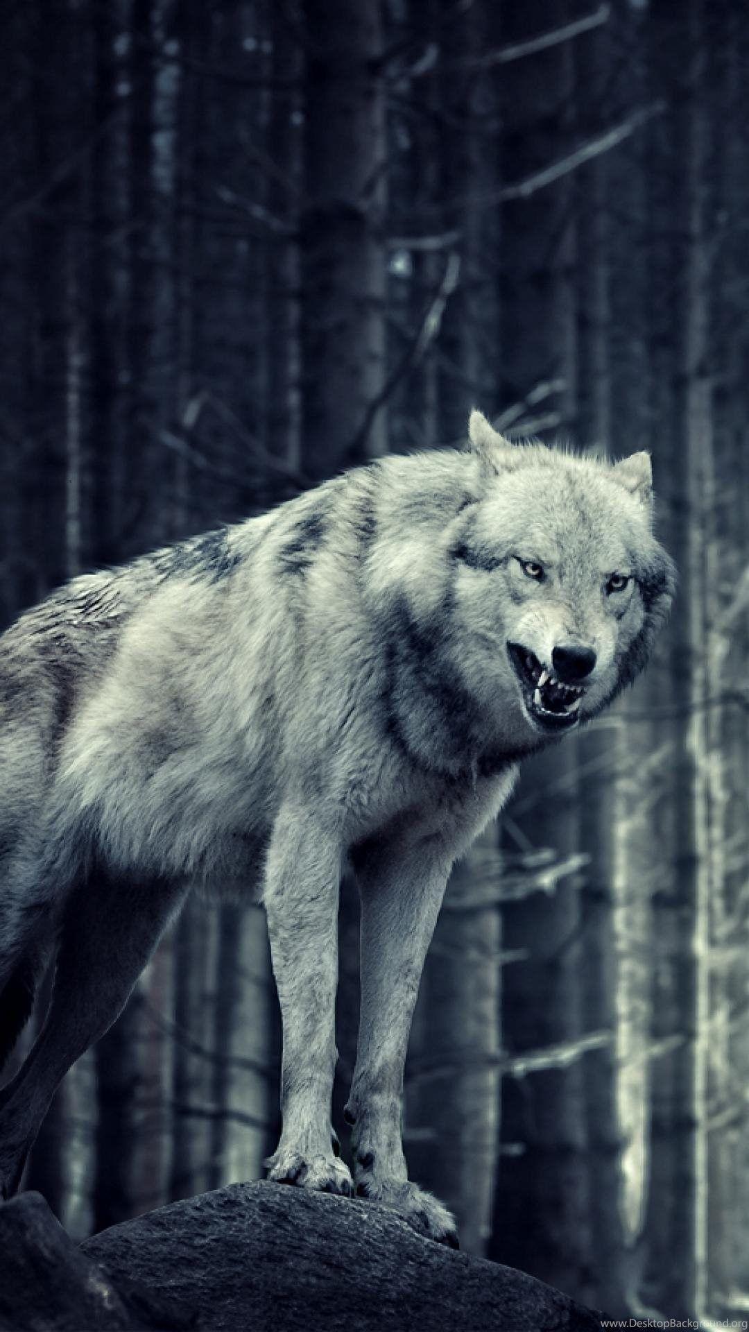 1080x1920 Lone Wolf hình nền