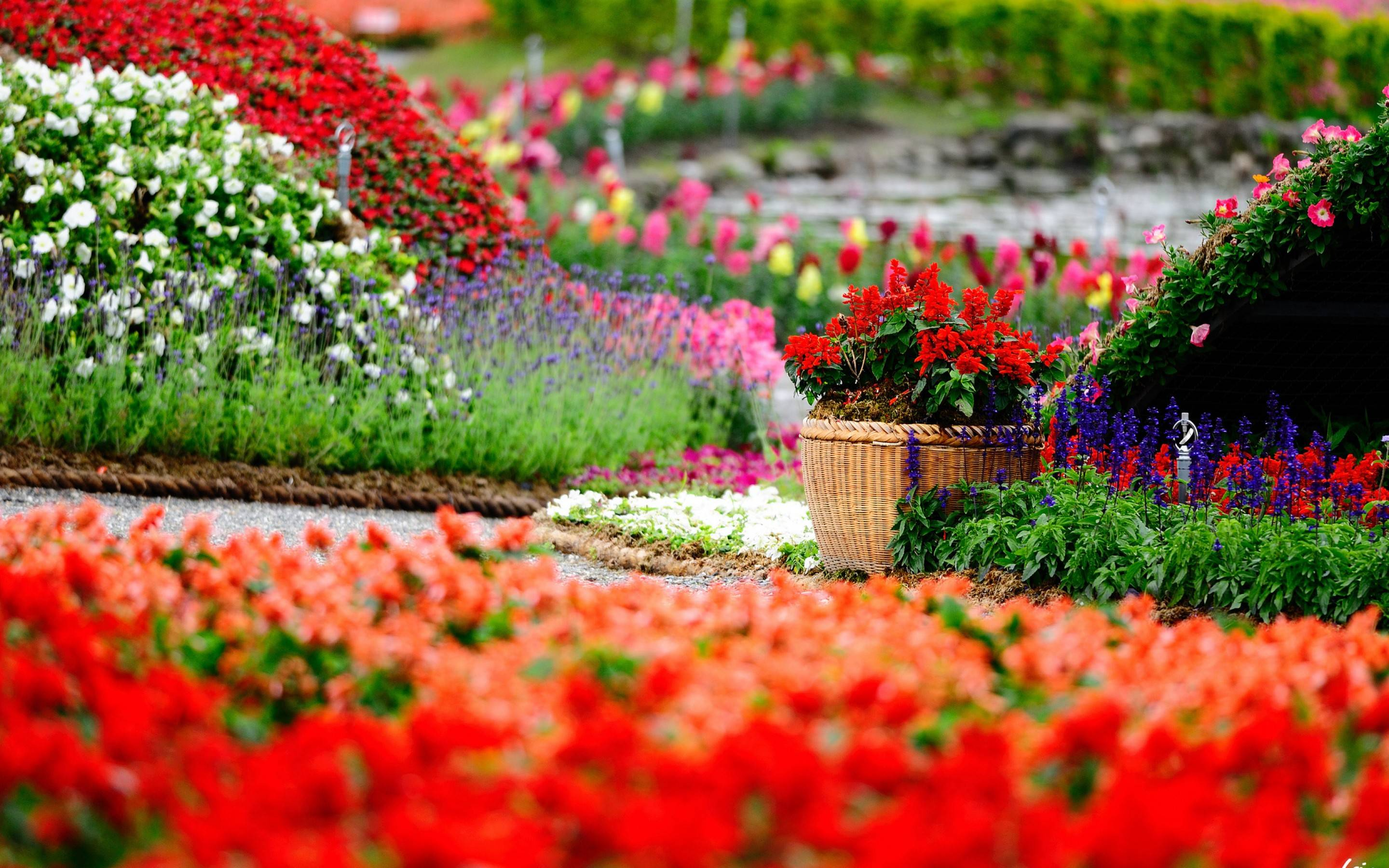 Flower Garden Wallpapers Top Free Flower Garden Backgrounds Wallpaperaccess