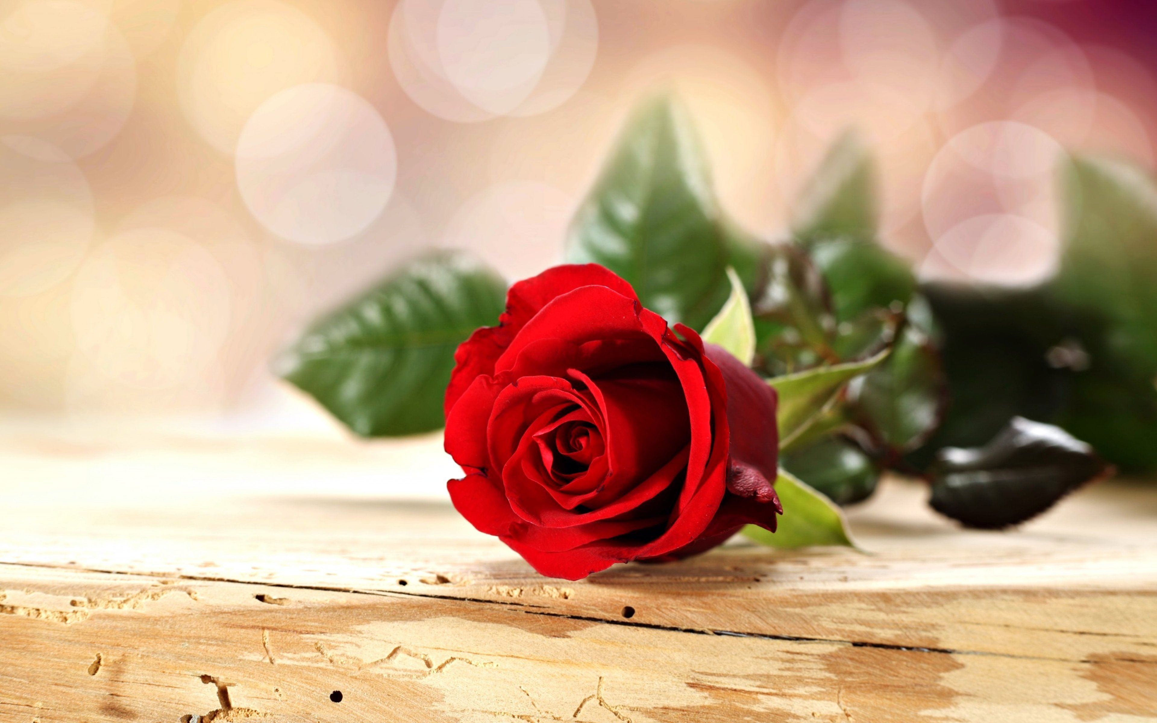 Romantic Rose Wallpapers Top Free Romantic Rose Backgrounds Wallpaperaccess