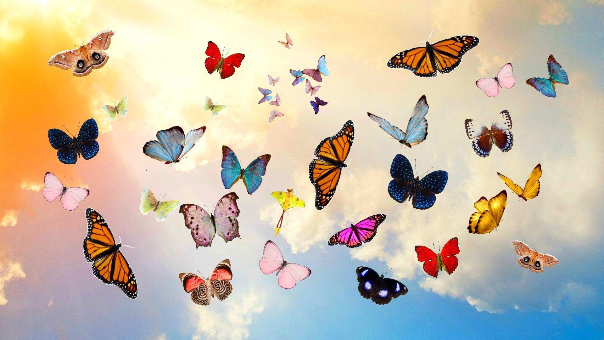 Hình nền con bướm 1920x1080.  2020 Hình nền dễ thương