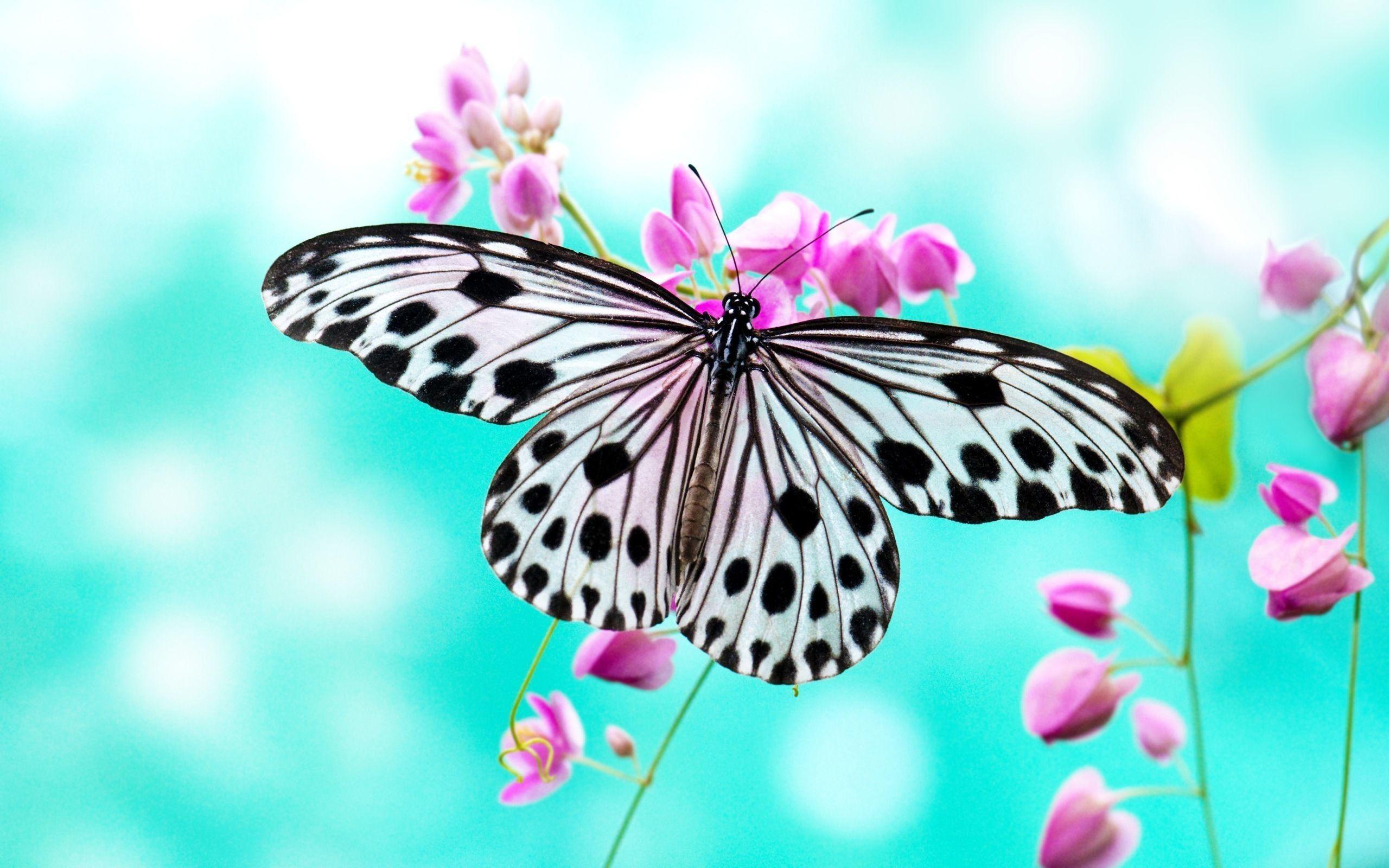 Máy tính để bàn hình nền con bướm hồng 2560x1600
