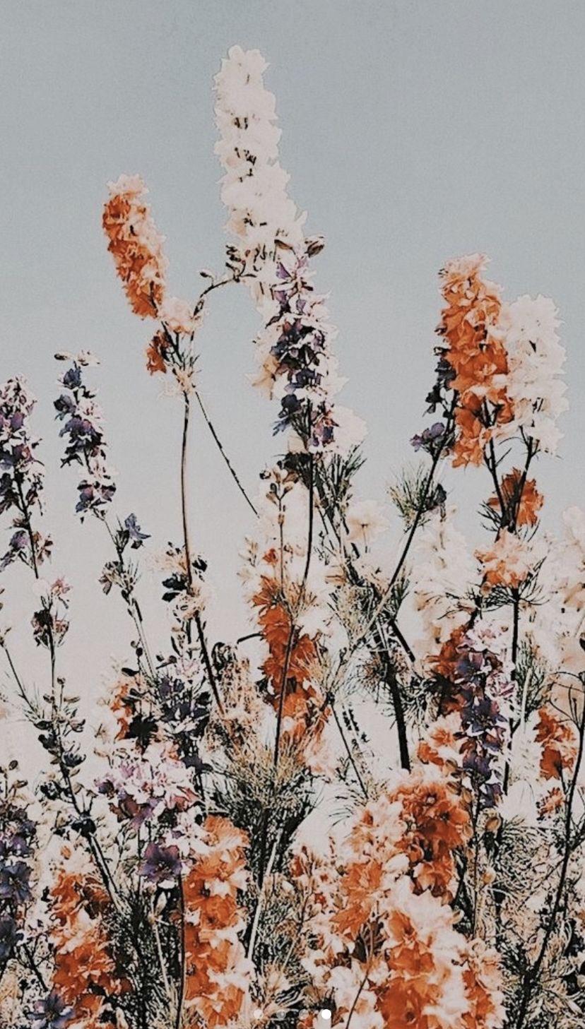 828x1457 Nền hoa Boho.  Cắt dán ảnh tường, Hình nền điện thoại hoa, Hình nền iPhone
