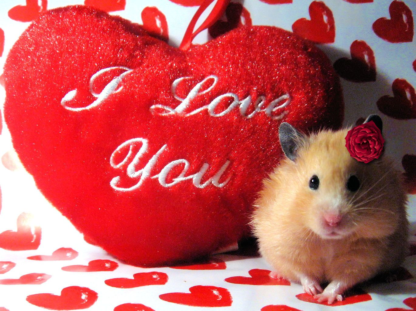 1369x1025 Cute Valentines Day