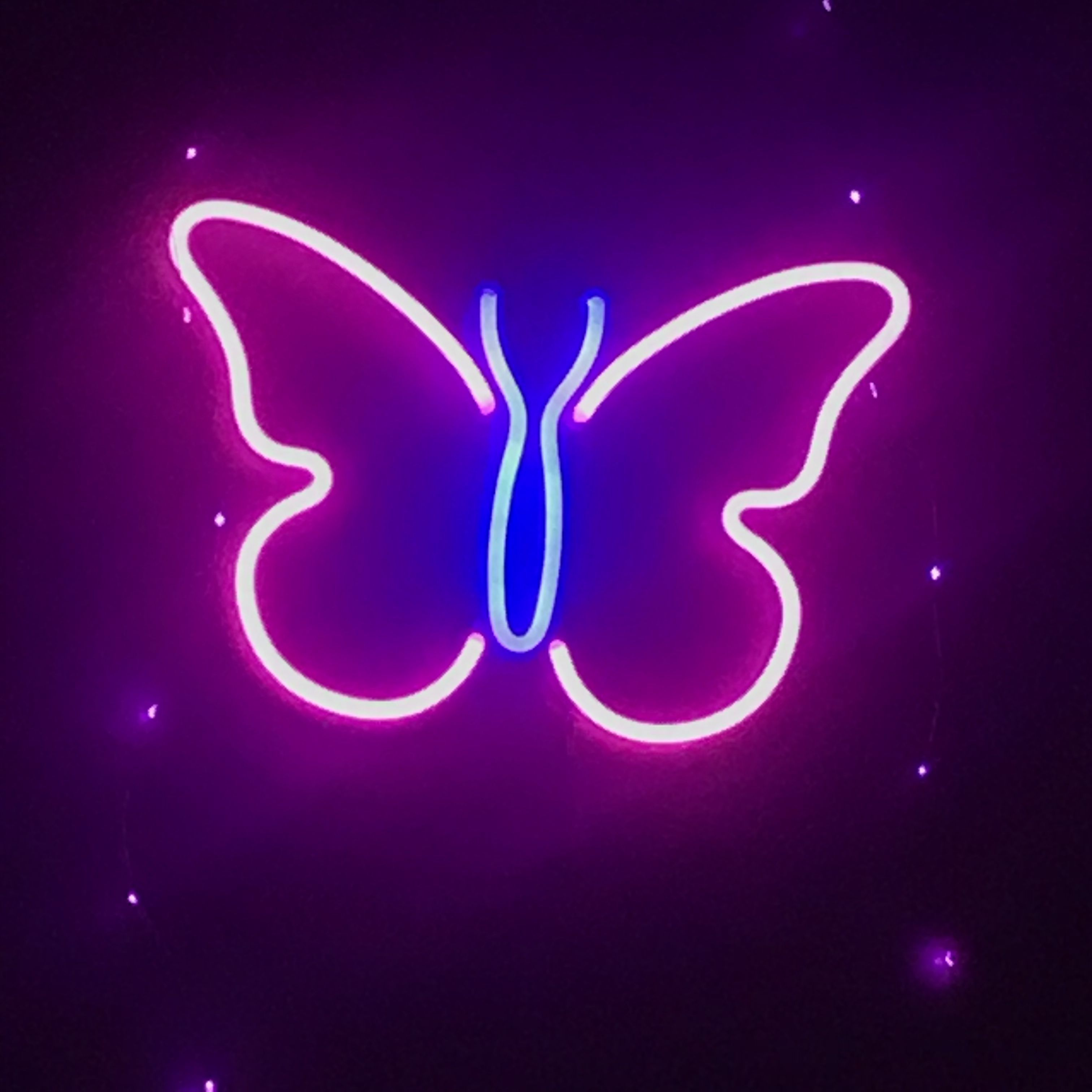 Awesome Neon Butterfly Wallpapers Top Free Awesome Neon Butterfly Backgrounds Wallpaperaccess