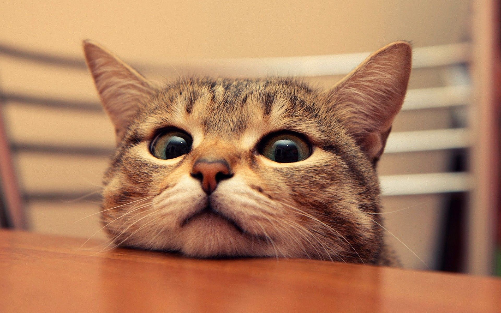 Funny Cat Wallpapers Top Free Funny Cat Backgrounds Wallpaperaccess