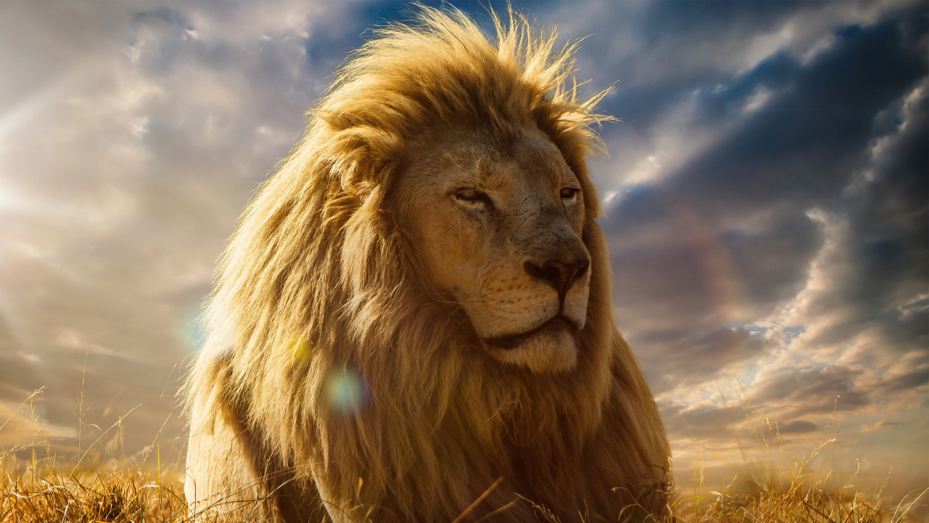 Narnia Wallpapers Top Free Narnia Backgrounds Wallpaperaccess