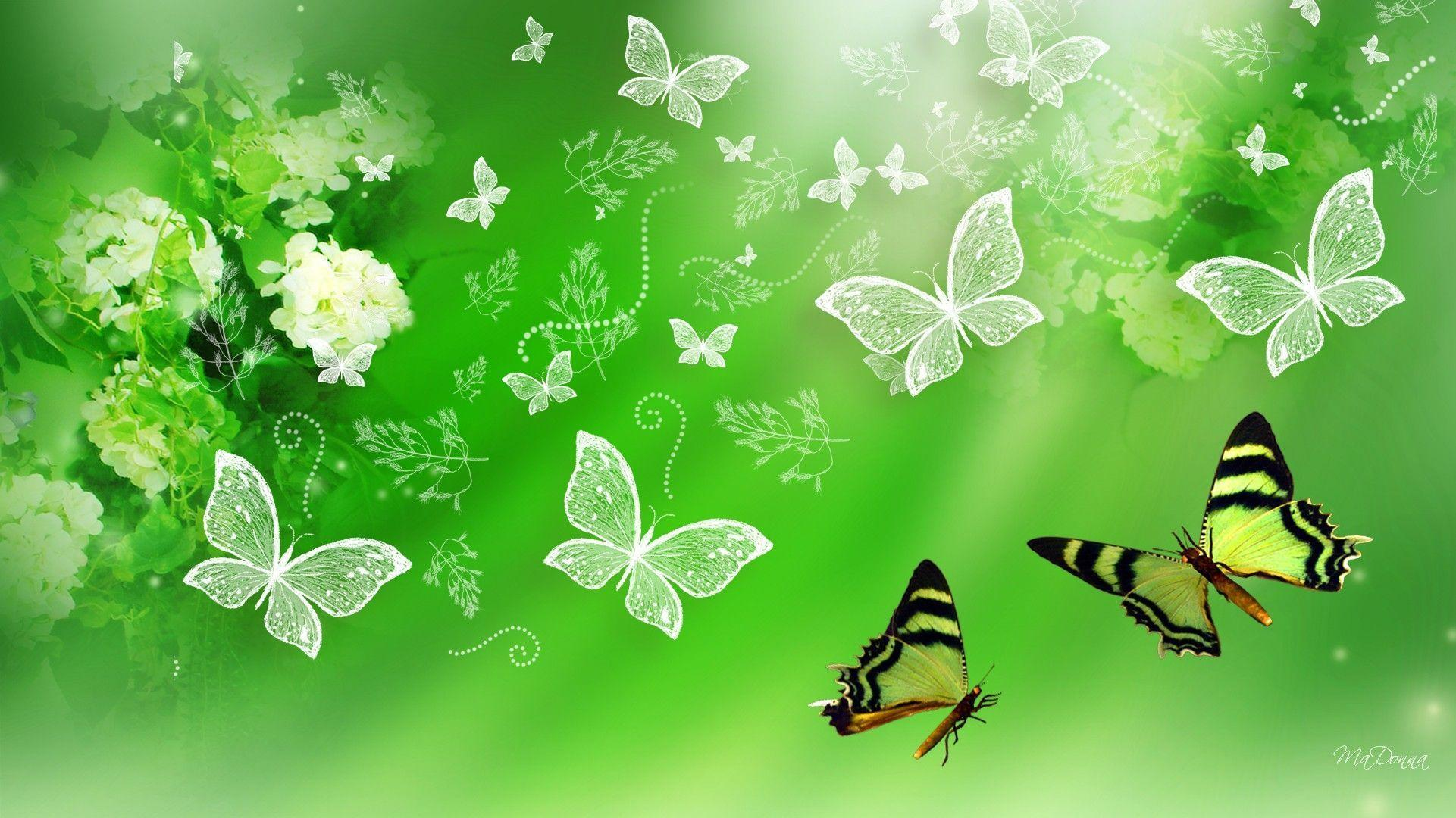 Green Butterfly Wallpapers Top Free Green Butterfly Backgrounds Wallpaperaccess