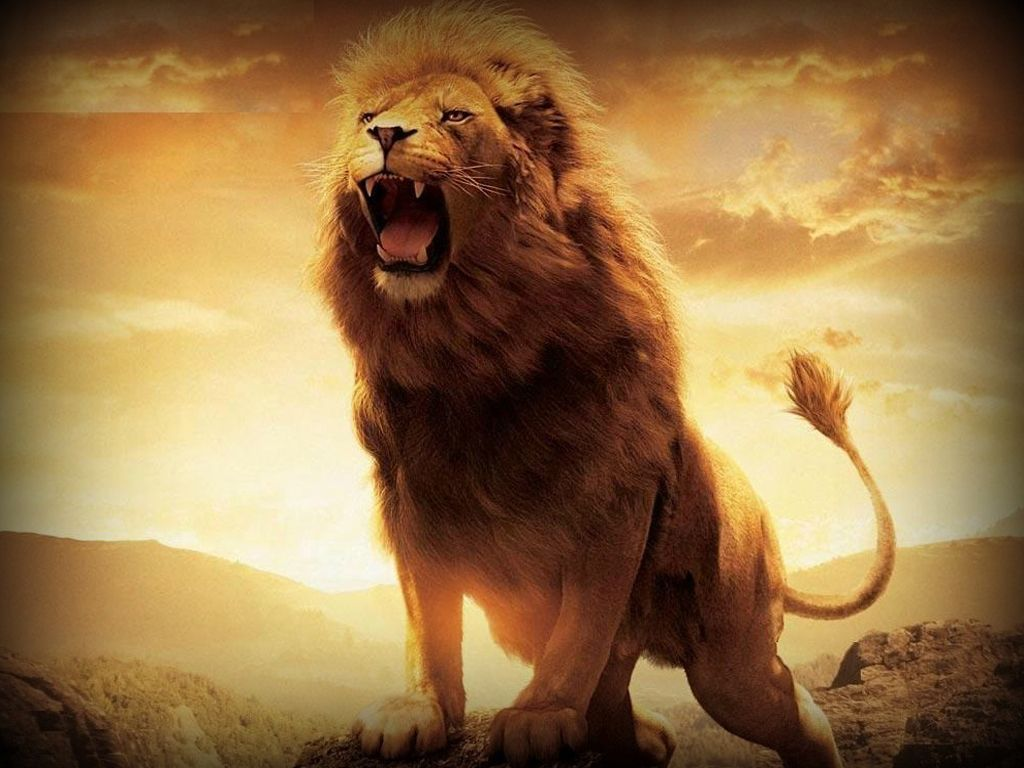 Cool Lion Wallpapers Top Free Cool Lion Backgrounds Wallpaperaccess