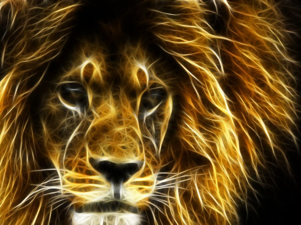 Amazing Lion Wallpapers Top Free Amazing Lion Backgrounds Wallpaperaccess