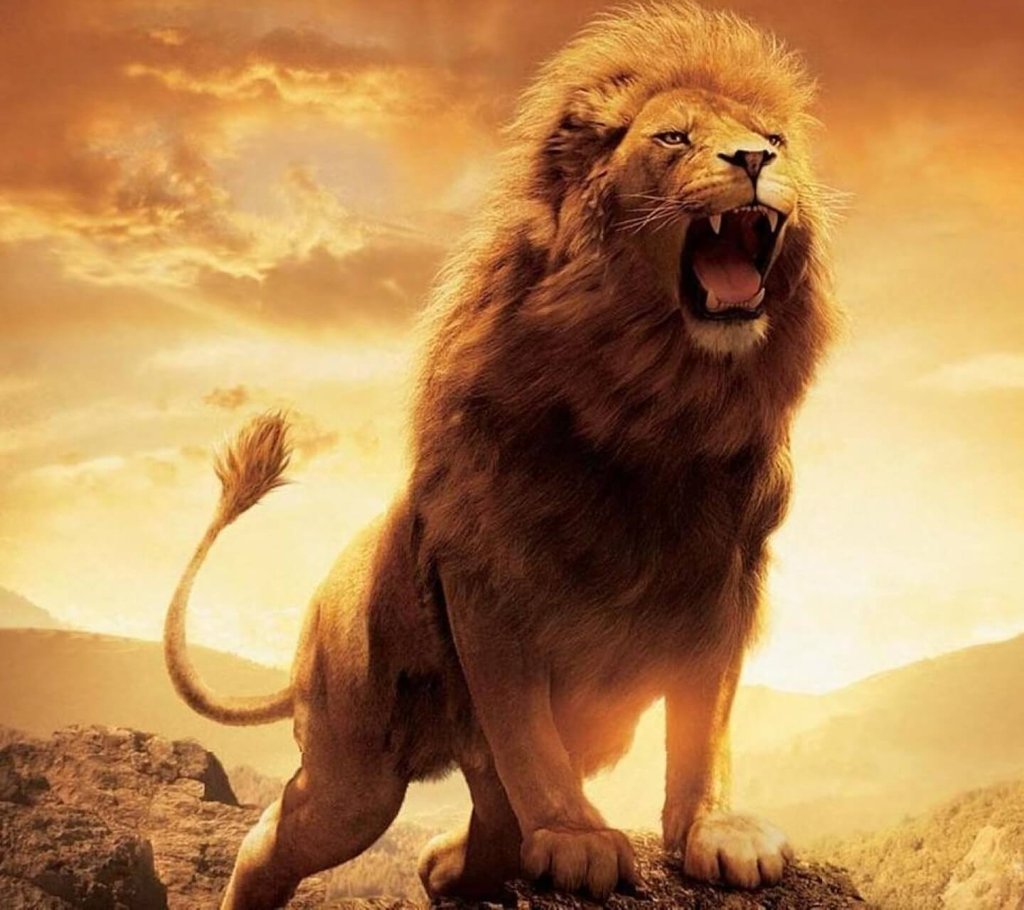 Cool Lion Wallpapers Top Free Cool Lion Backgrounds