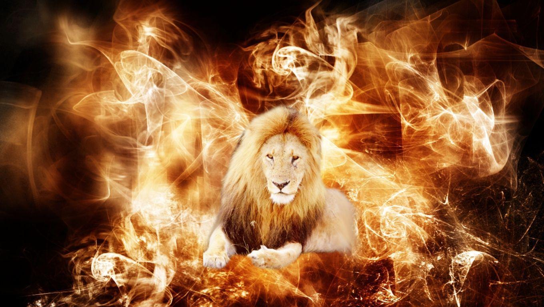 Lion Animal Wallpaper 3d