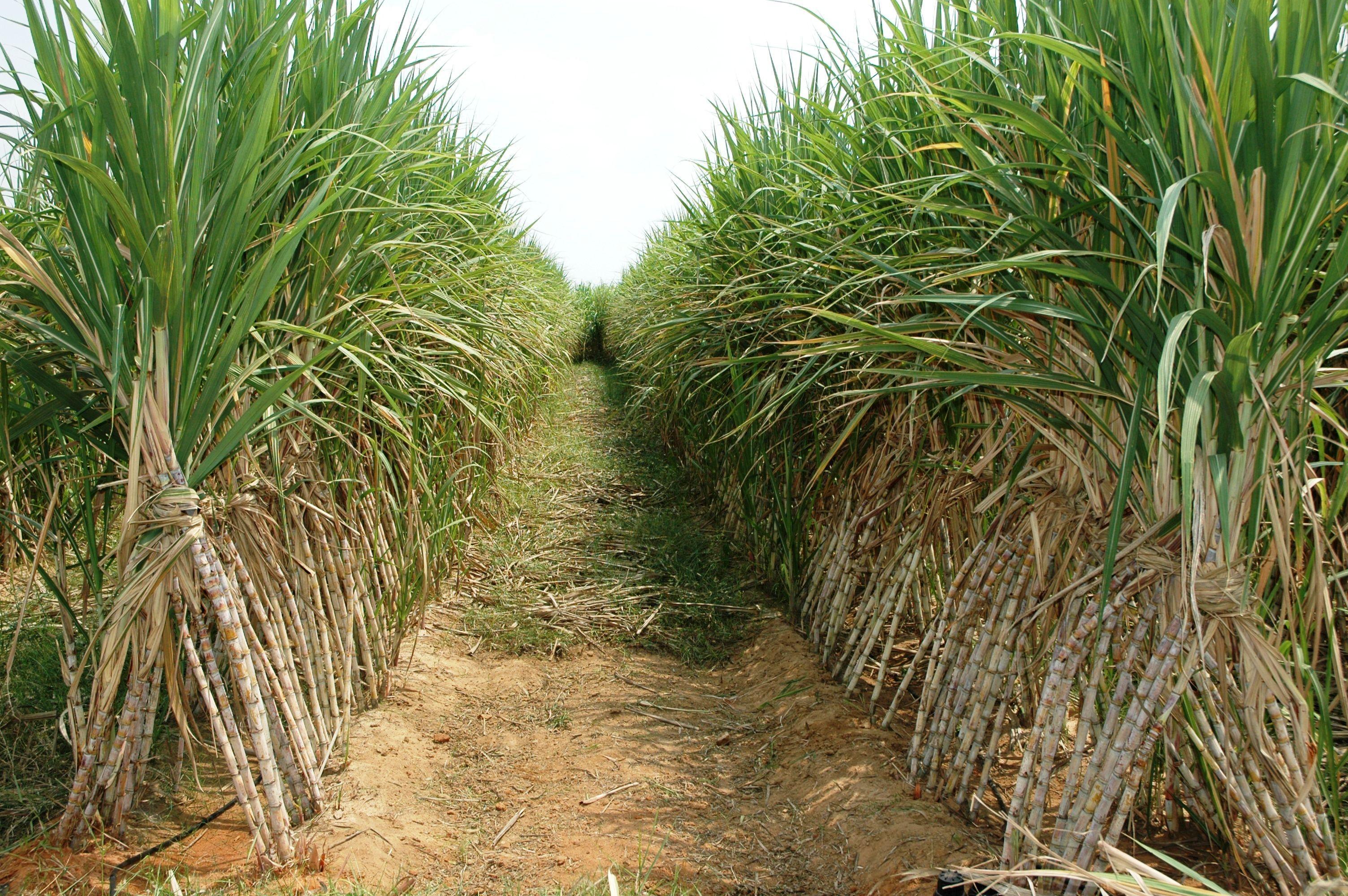 Momentum Biofuels (MMBF) Rockets 1,170% Without News On 12 Million Volume