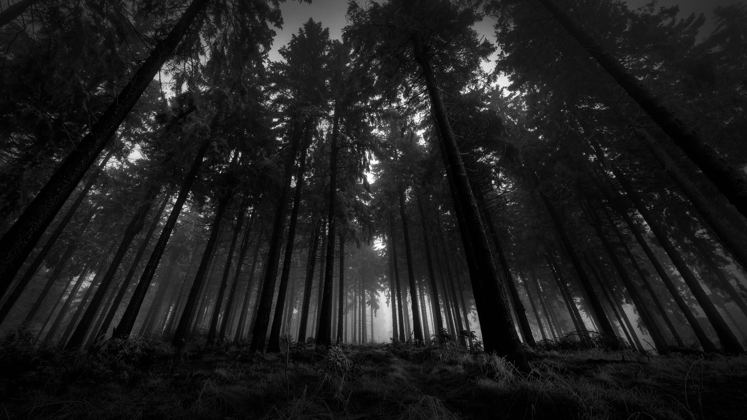 2560 X 1440 Dark Forest Wallpapers Top Free 2560 X 1440 Dark Forest Backgrounds Wallpaperaccess