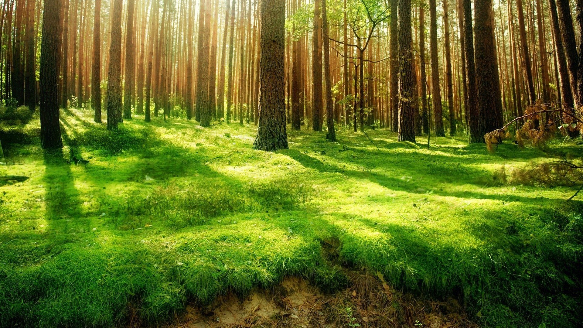 Permalink to Forest Hd Wallpaper Free Download