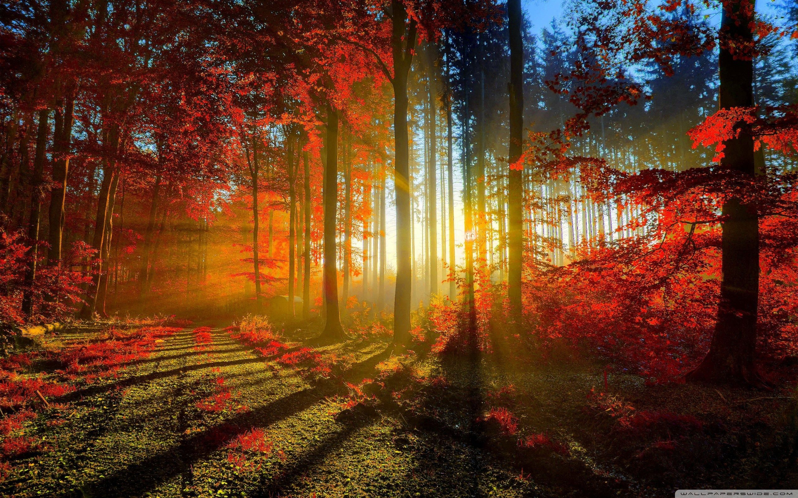 Red Forest Hd Wallpapers Top Free Red Forest Hd Backgrounds Wallpaperaccess