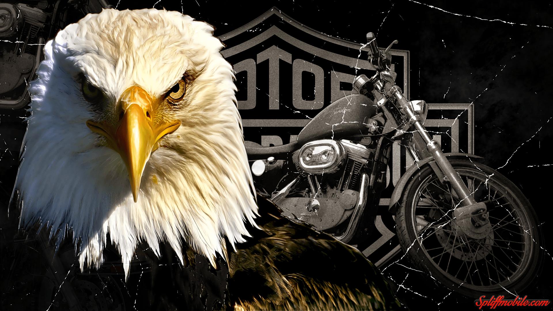 Harley Davidson Eagle Wallpapers Top Free Harley Davidson