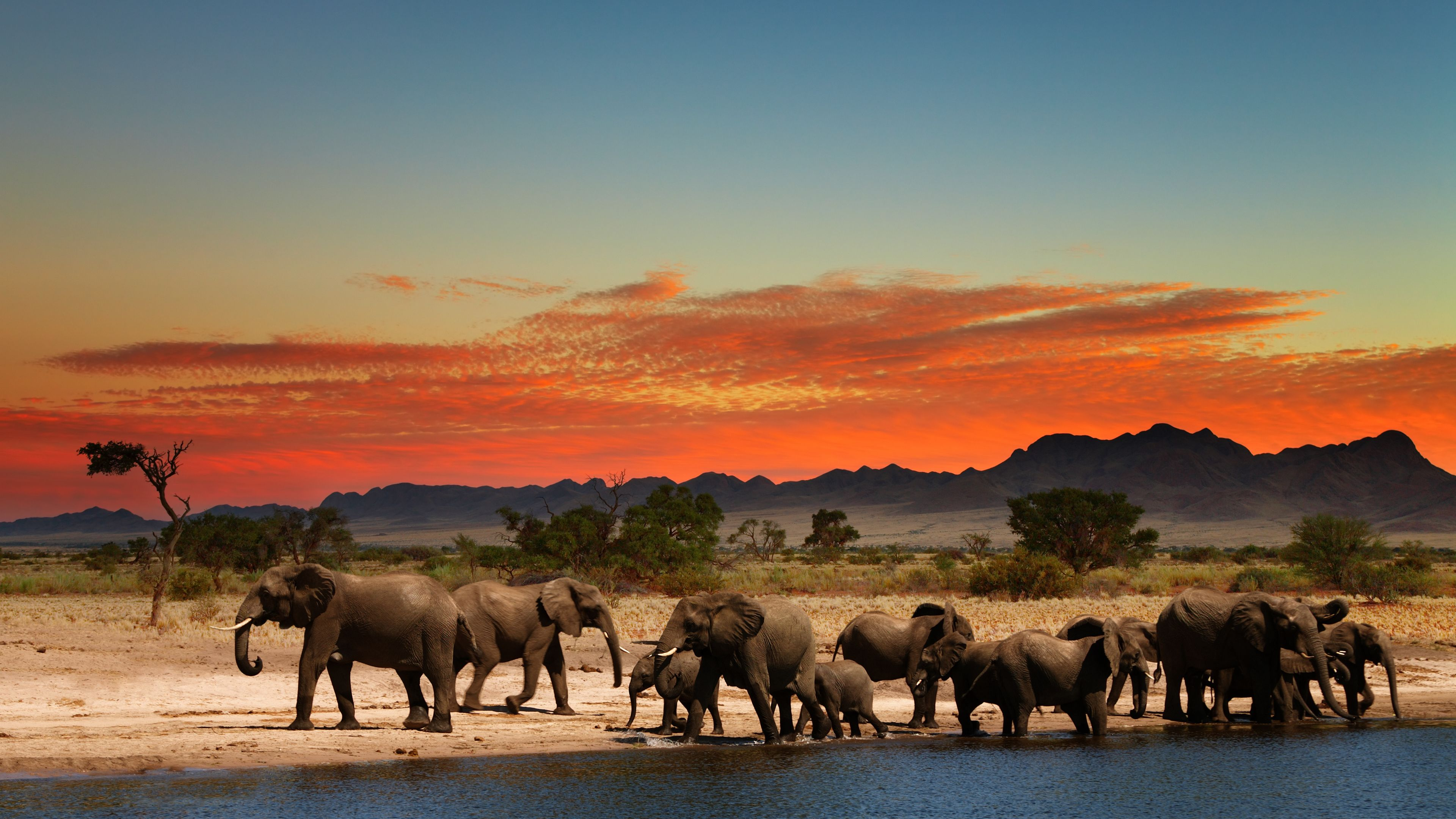 Africa 4k Wallpapers Top Free Africa 4k Backgrounds